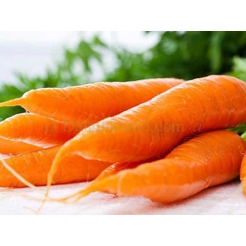 Carrot