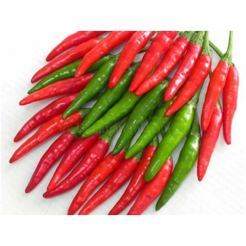 Small Red Chili/ Small Green Chili ( Hot Chili)