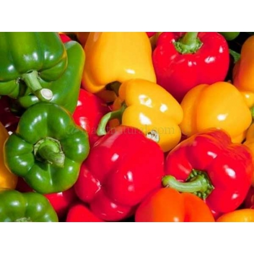 Green Pepper/Red Pepper/Yellow Pepper